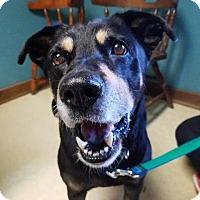 Adopt A Pet :: Jay - Gloversville, NY