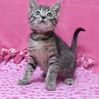 Adopt A Pet :: Dory - Monroe, WI