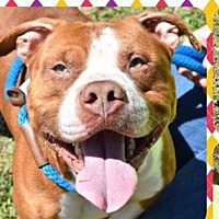 Adopt A Pet :: Dolan - Marietta, GA