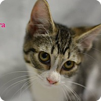 Adopt A Pet :: Kiera - Miami Shores, FL