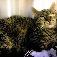 Adopt A Pet :: Winona - Webster, MA