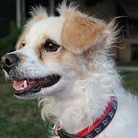 Adopt A Pet :: Wilson - Encino, CA