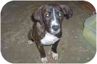 Hound (Unknown Type) Mix Puppy for adoption in Ft. Mitchell, Kentucky - Al-adopted