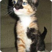 Adopt A Pet :: Arwyn - Davis, CA