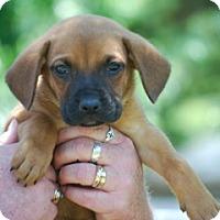 Adopt A Pet :: Josh - Providence, RI