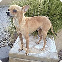 Adopt A Pet :: Phineas - Scottsdale, AZ