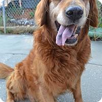 Adopt A Pet :: Duncan - Danbury, CT