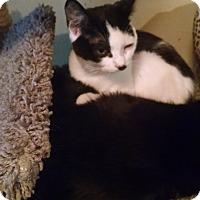 Adopt A Pet :: Suzie Q - Walla Walla, WA