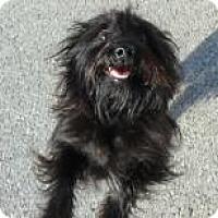 Adopt A Pet :: Sammy - Lockhart, TX