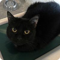 Adopt A Pet :: Chloe - Geneseo, IL