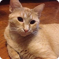 Adopt A Pet :: Mimosa (fee waived) - Chattanooga, TN