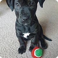 Adopt A Pet :: Thor - Gainesville, FL