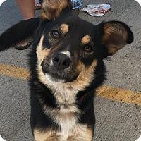 Adopt A Pet :: Harley - Jacksonville, TX