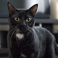 Adopt A Pet :: Highway 1 - Edmonton, AB