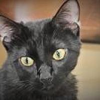 Adopt A Pet :: Selena - Duluth, GA