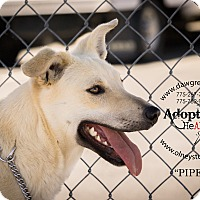 Adopt A Pet :: Piper - Gardnerville, NV