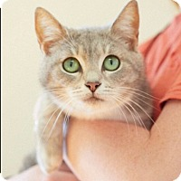 Adopt A Pet :: Essy - Marietta, GA