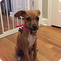Adopt A Pet :: Ingen - Alpharetta, GA