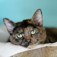 Adopt A Pet :: Darla - Charleston, SC