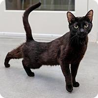 Adopt A Pet :: Petra - Boise, ID