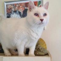 Adopt A Pet :: STUART - THORNHILL, ON