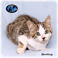 Adopt A Pet :: Berkeley - Howell, MI