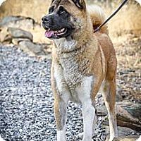 Adopt A Pet :: Sasha - Adopted! - Hayward, CA