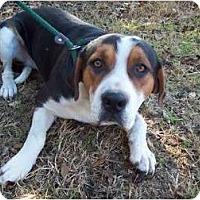 Adopt A Pet :: Blue - Courtesy post - Glastonbury, CT