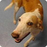 Adopt A Pet :: Walter - Gainesville, FL