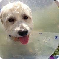 Adopt A Pet :: Sonny - Milan, NY
