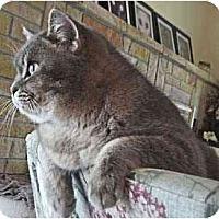 Adopt A Pet :: Bridgette - Davis, CA