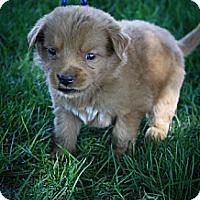 Adopt A Pet :: Dunkin - Broomfield, CO