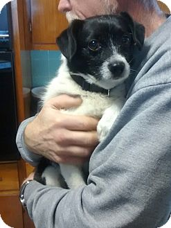 Terrier (Unknown Type, Small) Mix Dog for adoption in Hillsville, Virginia - Buddy