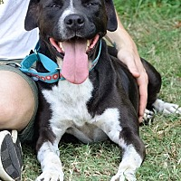 Adopt A Pet :: Carla - Midlothian, VA