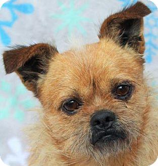 Affenpinscher Mix Dog for adoption in Red Bluff, California - Oscar