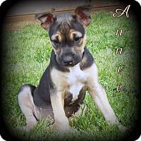 Adopt A Pet :: Annie - Denver, NC