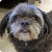 Adopt A Pet :: Fred - Sprakers, NY