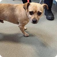 Adopt A Pet :: Banner - Westminster, CA
