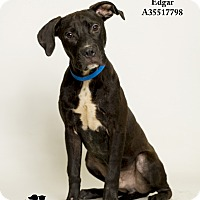 Adopt A Pet :: Edgar - Baton Rouge, LA