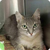 Adopt A Pet :: Zinnia - Bridgewater, NJ