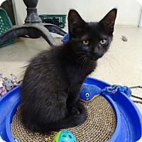 Adopt A Pet :: Honey - Belleville, MI