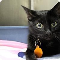 Adopt A Pet :: bubbles - Muskegon, MI