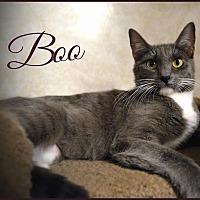 Adopt A Pet :: Boo - Sherman Oaks, CA