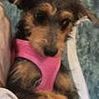 Adopt A Pet :: MADISON - Palm Desert, CA