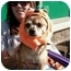 Photo 1 - Chihuahua Mix Dog for adoption in Crown Point, Indiana - Chimichanga