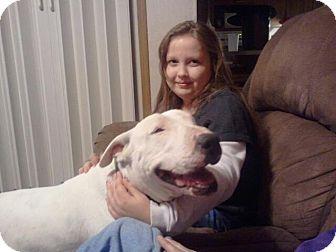 Bull Terrier Dog for adoption in Sachse, Texas - Dozer