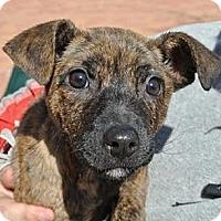Adopt A Pet :: Kirbena (Kirby) - Houston, TX