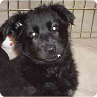 Adopt A Pet :: Lucy - Washington, NC