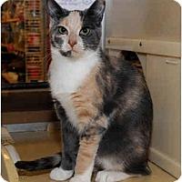 Adopt A Pet :: Nessa - Farmingdale, NY