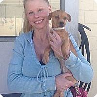 Adopt A Pet :: Cherrylee - Encinitas, CA